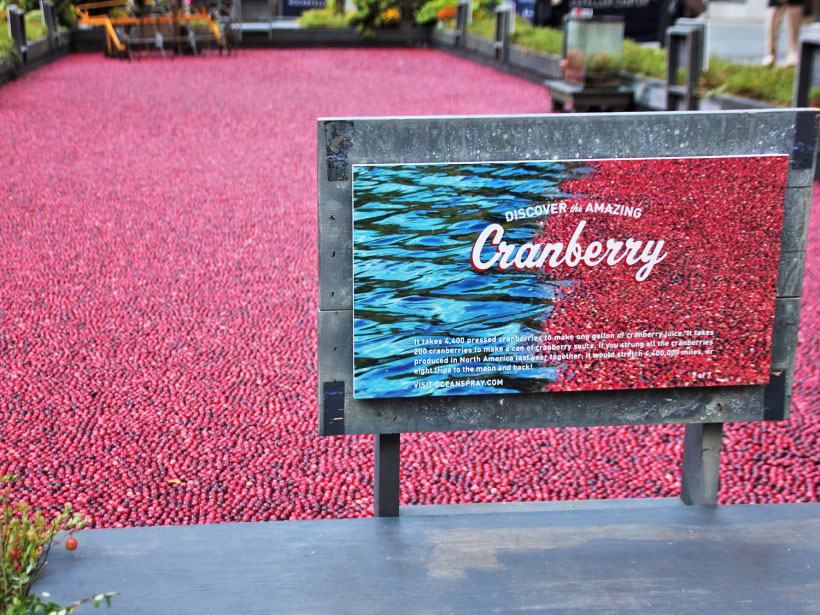 Fall is here and so are the cranberries
