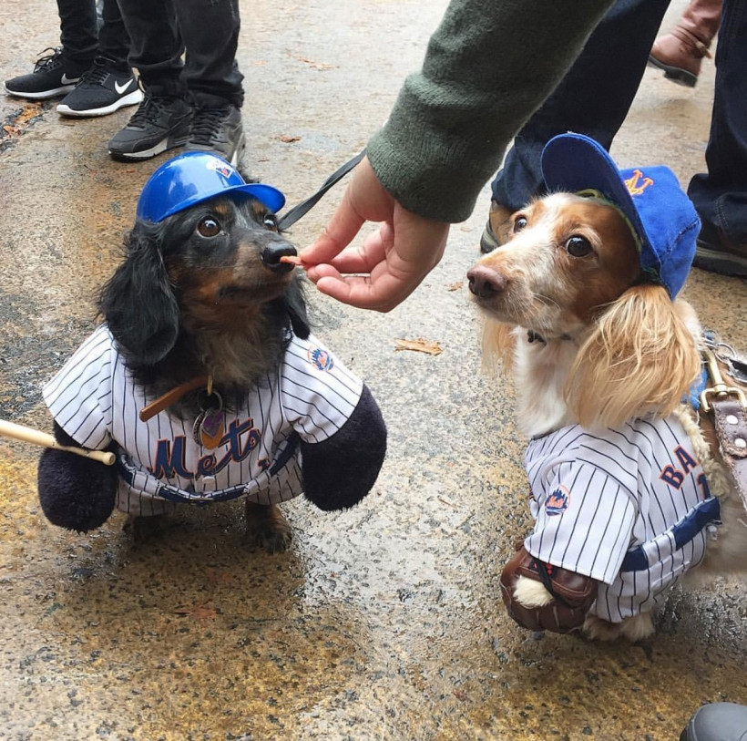 Every dog has it's day at annual Halloween dog parade