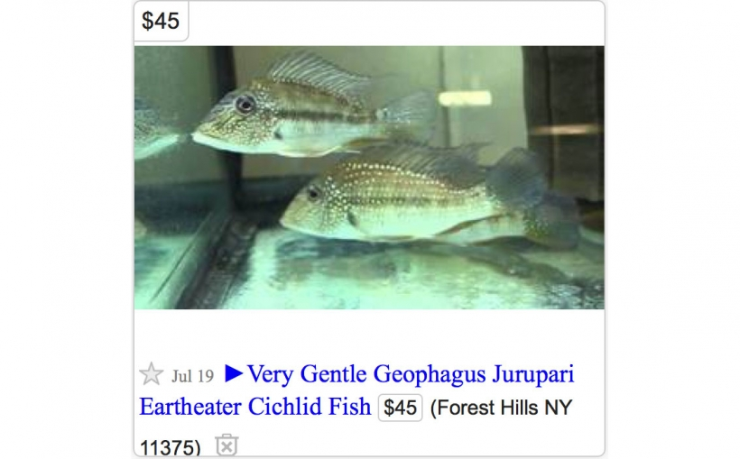 This week on New York City Craigslist
